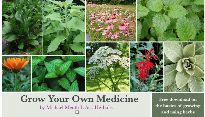 medicinal plant tour